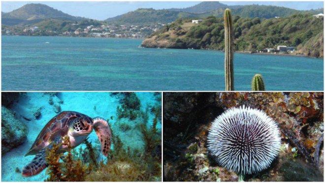 10 Parcs naturels marins et aires marines protégées