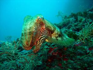 Golfe du Lion : Appel à Projets pour s'approprier le milieu marin