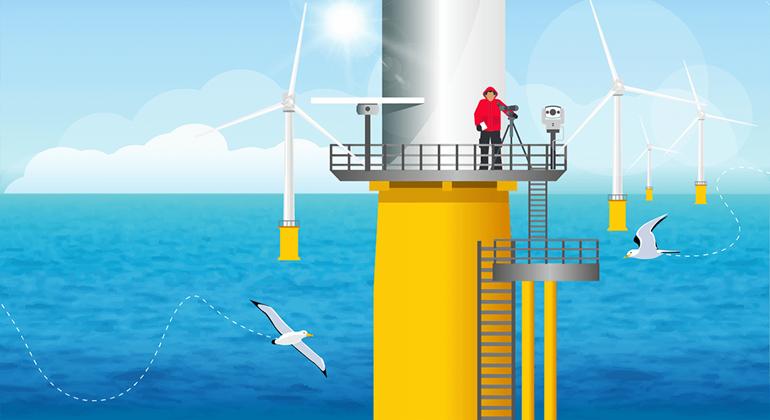 THANET : Les oiseaux marins évitent les éoliennes en mer