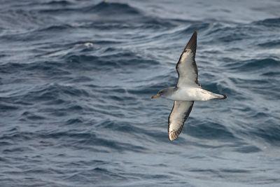 Cohabys, une startup issue de l'Université de la Rochelle étudie la faune marine pour les parcs en mer français