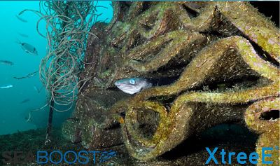 XtreeE Seaboost EDM 11 10 019 result