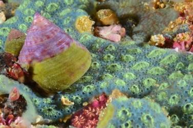 SPECIES – Le rapport sur les Interactions des câbles sous-marins avec l'environnement côtier