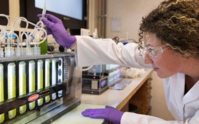 TotalEnergies et Veolia s'associent pour développer la culture des microalgues